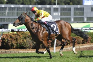2016 Golden Rose an Option for Tango Rain