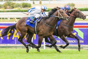 Dissident has been included in nominations for the 2014 Randwick Guineas