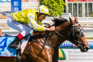 Bull Point is a leading chance for success in the 2014 Toorak Handicap. Photo: Race Horse Photos Australia