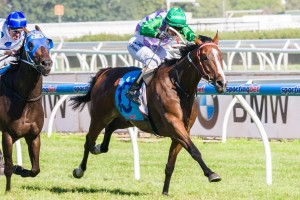 Prince Of Penzance has been confirmed for the 2014 Listed Roy Higgins Stakes