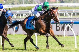 Prince Of Penzance is favourite to claim the 2014 Mornington Cup