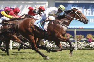 A Time For Julia is highly rated by trainer Peter Moody heading into the Oakleigh Plate.