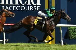 Super Cash to Contest Newmarket Handicap Fresh