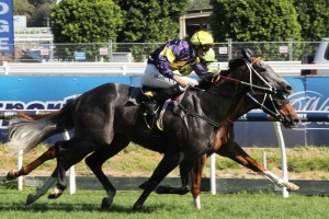 2017 Canterbury Stakes Odds Update
