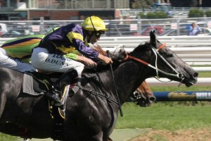 Michael Hawkes is confident Chautauqua will perform to a typically high standard in Saturday's All Aged Stakes. Photo: Adrienne Bicknell
