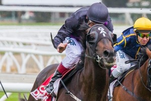 Peter Young Stakes betting & tips available at Ladbrokes
