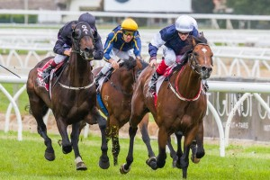 God Has Spoken, who missed out on the Peter Young Stakes to Fiorente (pictured) will contest the 2014 Northerly Stakes.