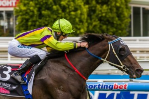 Spirits Dance winning the 2014 Angus Armanasco Stakes.