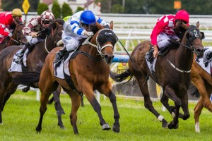 Vilanova is outright favourite for success in the 2014 Queensland Derby