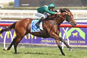 2013 Australian Guineas Field Update – All Too Hard Tops First Acceptances