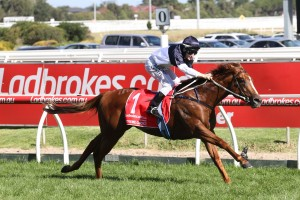 2017 Blue Diamond Stakes Over Millions for Cao Cao