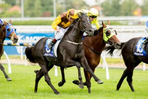 Alpine Eagle will likely target the 2015 South Australian Derby. Photo: Sarah Ebbett