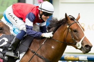 Sabatini is favourite to win the Kewney Stakes at Flemington on Saturday.