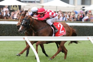 Miss Promiscuity is the Races.com.au tip to win Saturday's Group 3 Ladbrokes Odds Boost Stakes at Caulfield. Photo: Ultimate Racing Photos