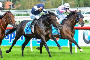 Trainer David Hayes has revealed Jet Away will return in to racing in the 2014 Memsie Stakes