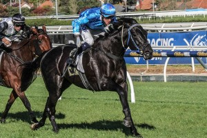 Fontein Ruby remains outright favourite to win the 2015 Australasian Oaks. Photo: Adrienne Bicknell