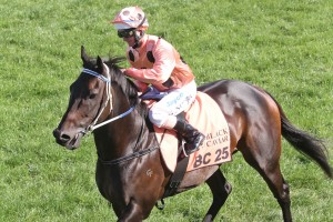 Sistonic, the three quarter sister of Black Caviar (pictured), will get her first metropolitan test on Friday.