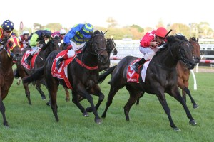 Sheidel Heads 2016 Sensis Stakes Field & Betting Odds