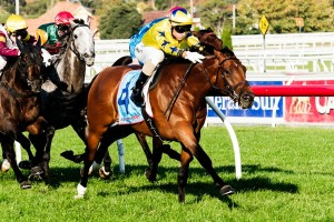 Midsummer Sun will be making his weight-for-age debut in the Group 2 Zipping Classic at Caulfield this afternoon.