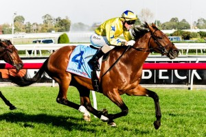 Midsummer Sun will use the ATC Cup on Saturday as a trial run for the Perth Cup.