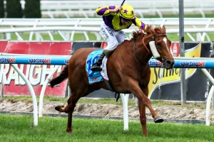 Sonntag is reportedly a picture of health ahead of Saturday's 2015 Ballarat Cup. Photo: Race Horse Photos Australia