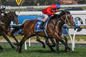 Gold Symphony is the Races.com.au tip to win Saturday's Listed Regal Roller Stakes at Caulfield. Photo: Adrienne Bicknell