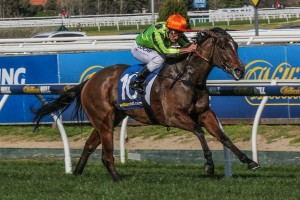 Emergency runner Vezalay currently leads 2015 Cockram Stakes betting markets. Photo: Adrienne Bicknell