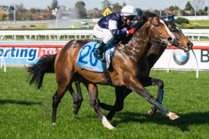 Talented stayer Sea Moon is likely to target the 2014 Melbourne Cup