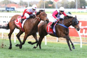 Hell Or Highwater and Sea The Sparkle fought out the finish in the opening race at Caulfield. Photo by: Ultimate Racing Photos
