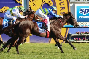 Gregers has been confirmed in the final field for the 2014 Schillaci Stakes