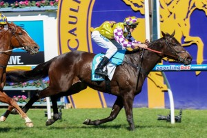 Trainer John Saddler is confident the cut in the ground at Sandown will benefit Henwood in the 2014 Kevin Heffernan Stakes.