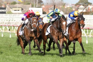 Keen Array returned to winning form in the Testa Rossa Stakes this afternoon. Photo: Ultimate Racing Photos