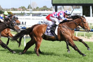 Felll Swoop scored his fifth straight win in the Testa Rossa Stakes at Caulfield.Photo by Ultimate Racing Photos.