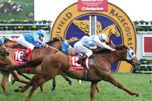 Magnapal is into the Caulfield Cup after winning the Foundation Cup at Caulfield. Photo by Ultimate Racing Photos.