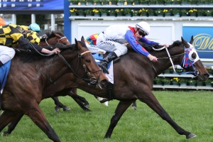 Politeness, white cap, holds of the fast finishnig Griante, black and gold, to win the Sprint Series Heat 2 Stakes at Caulfield. Photo by Ultimate Racing Photos.
