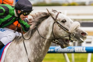 Gris Caro has won the 2014 Naturalism Stakes