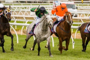 Gris Caro scored a tough staying victory in the 2014 Naturalism Stakes and will now run in the 2014 Caulfield Cup.