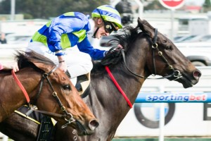 Gregers will target the 2014 Sir Rupert Clarke Stakes after registering a resounding first-up victory