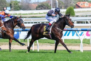 Afleet Esprit is a top contender for the Thousand Guineas this Saturday at Caulfield Racecourse.