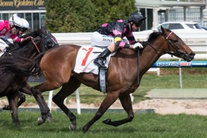 Spinderbella is set to finally get her start this Saturday after receiving late scratchings from her last two races.