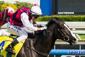 It Is Written will defend his title in the Abell Stakes at Moonee Valley tonight.
