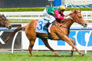 May's Dream remains narrow favourite in Myer Classic betting markets. Photo: Race Horse Photos Australia