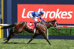 Winx will complete her Autumn Carnival preparation in this afternoon's Queen Elizabeth Stakes at Randwick. Photo: Ultimate Racing Photos
