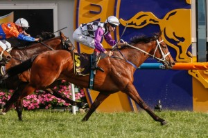 Amicus offers punters great value in 2015 Light Fingers Stakes betting markets. Photo: Race Horse Photos Australia