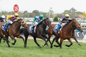 Signoff (centre) is our pick to win the 2014 David Jones Cup.
