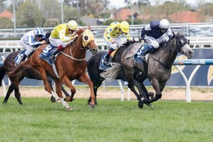 Fawkner (grey) could enjoy one final spring tilt in the Zipping Classic this Saturday.