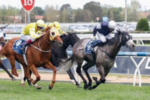Fawkner (inside) is in-form and ready to go in the Melbourne Cup 2014.