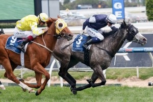 Turnbull Stakes placegetters can fair well in caulfield cup betting markets.