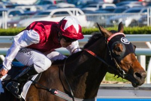 Long John Firms In 2013 Cox Plate Odds