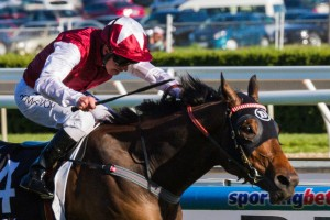 Long John has been the best backed runner in 2013 Cox Plate betting markets.